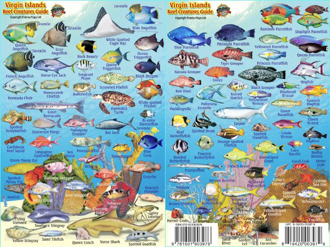 Waterproof Virgin Islands Fish ID Cards - Double sided