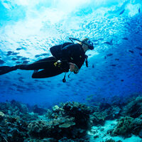 Scuba diver in one of the best dive sites in the BVI